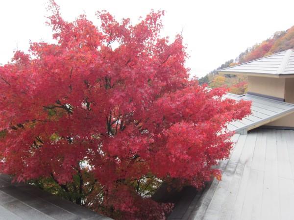 屋根上の紅葉.jpg