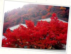 真っ赤な紅葉の秋