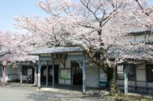 桜と養老駅
