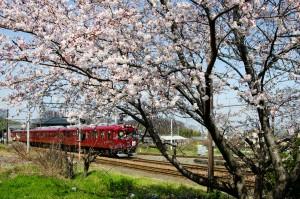 桜と養老鉄道